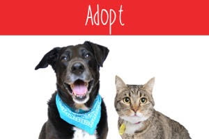 adopt home page graphic