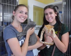 Luna Kitten adopter