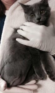 Luna Kitten amputated leg-crop