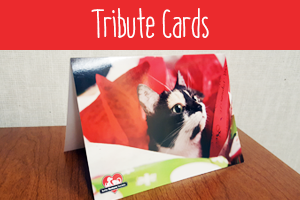 cards-homepage-thumbnail