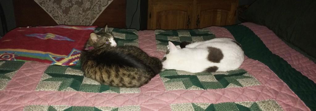 Miss Quinn and Dooley