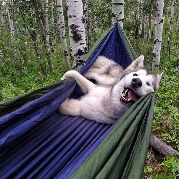 camping-with-dog-tips