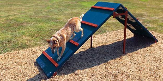 Diy Dog Agility Training