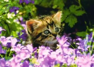 kitten-card