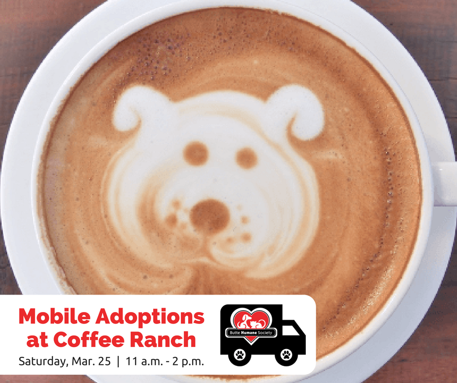 mobile-adoptions-coffee-ranch