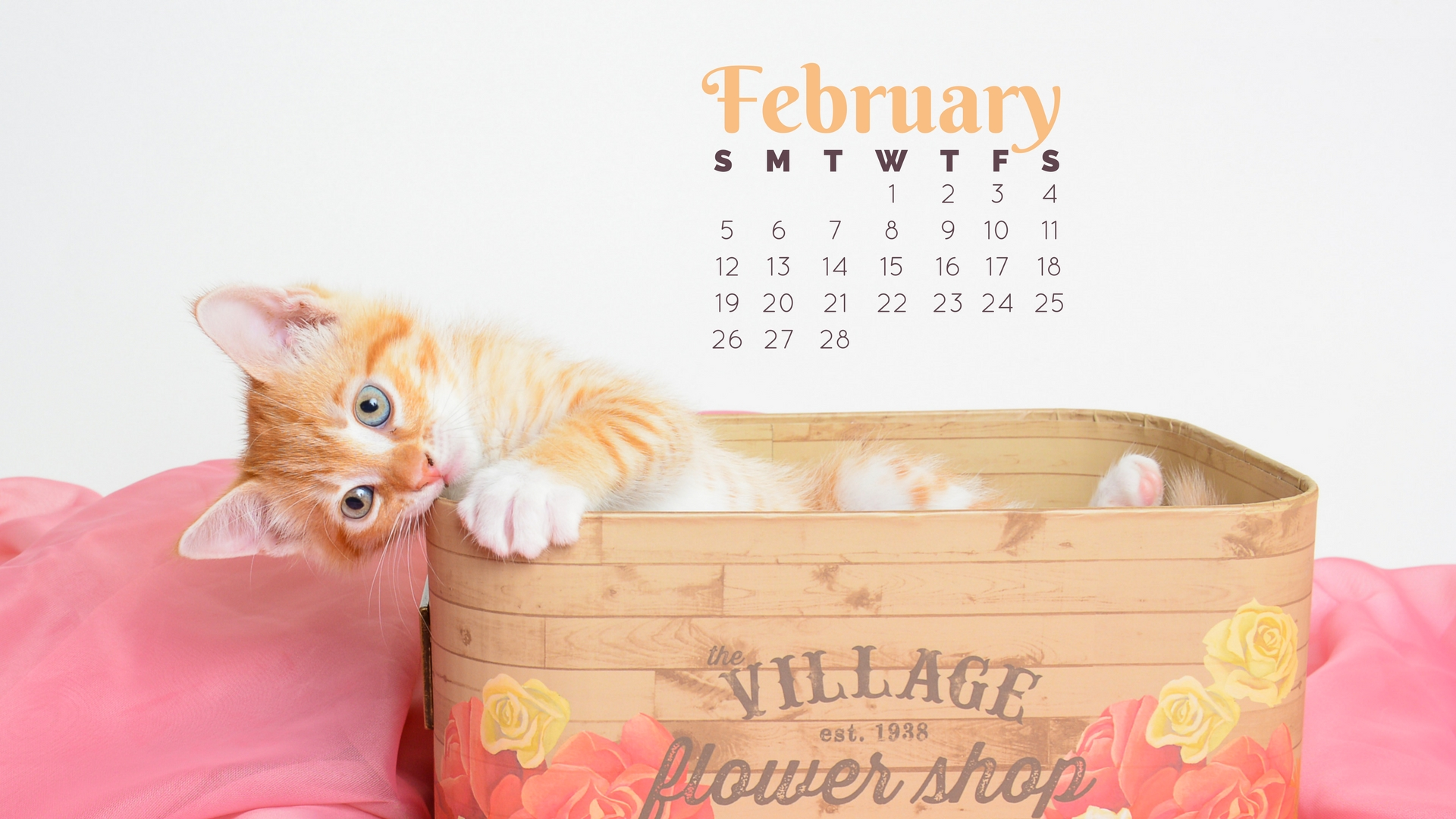 Butte Humane Society Feb 2017 Cat