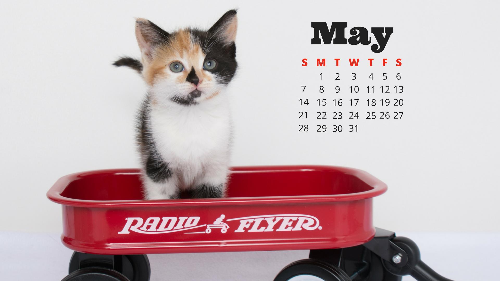 may-cat-calendar