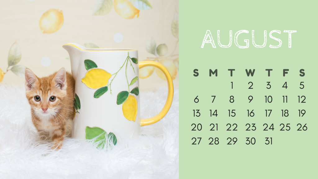 August Cat Calendar - Tippy
