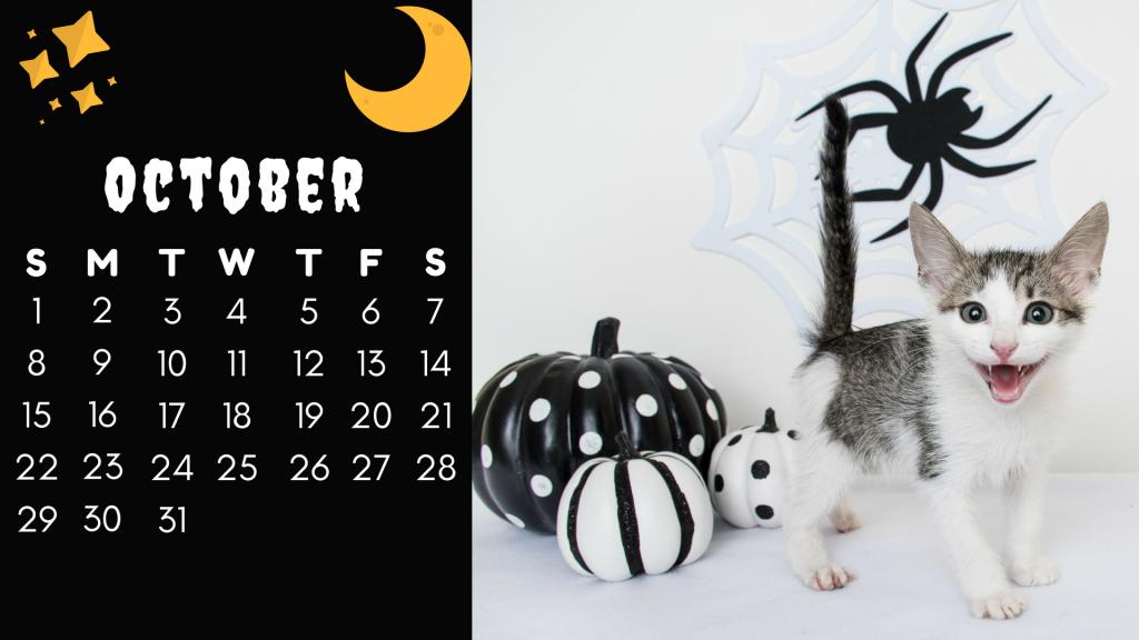 October Cat- Marrone (1)