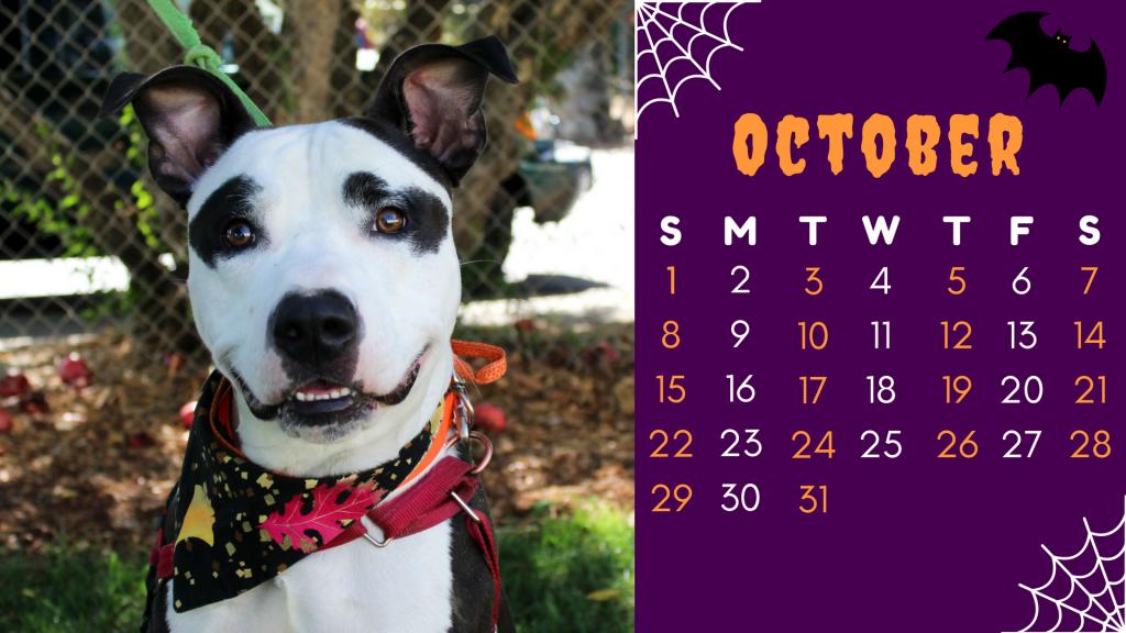 October Dog- Jack Skellington (1)