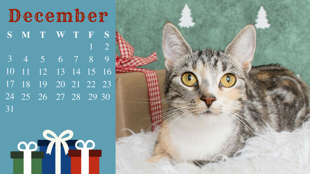 December cat- Hopper