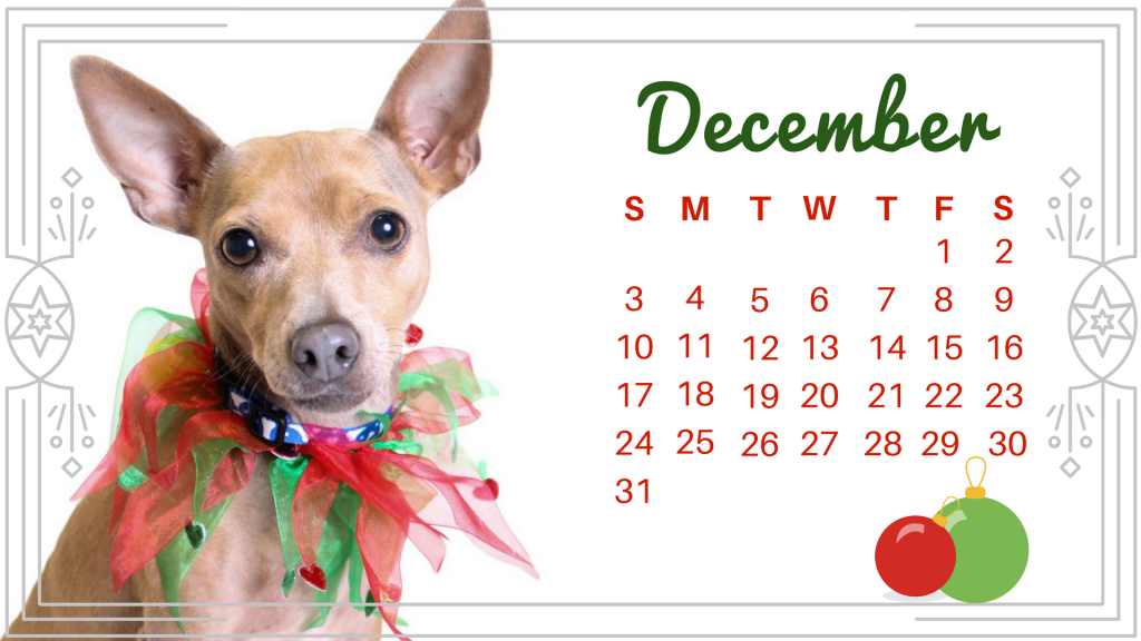December dog-Mimsy