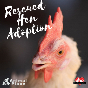 Rescued-Hen-Adoption-FB-Graphic