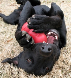 dog-and-kong-by-oakleyoriginals