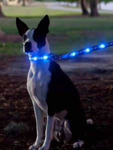 LED Collar and LEash