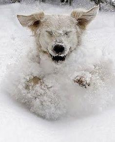 Dog in Snow 2 15-15