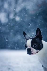 Dog in Snow 3 12-15