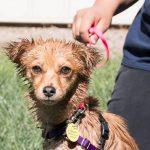 dog-wash-day