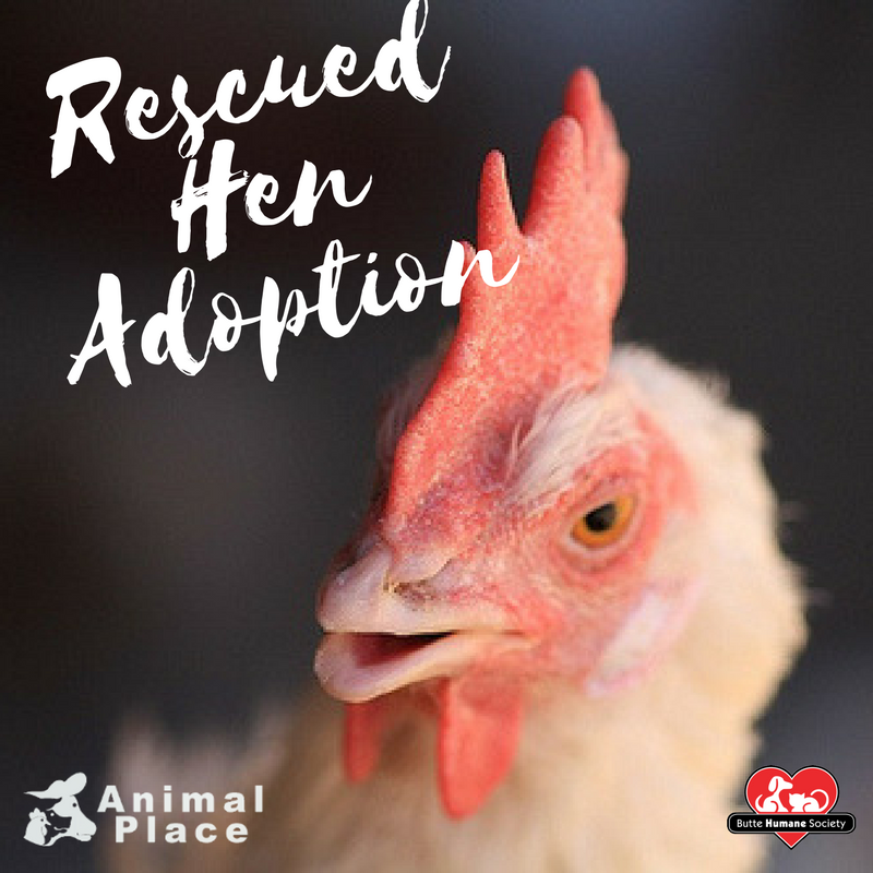 Animal Place Rescued Hen Adoption