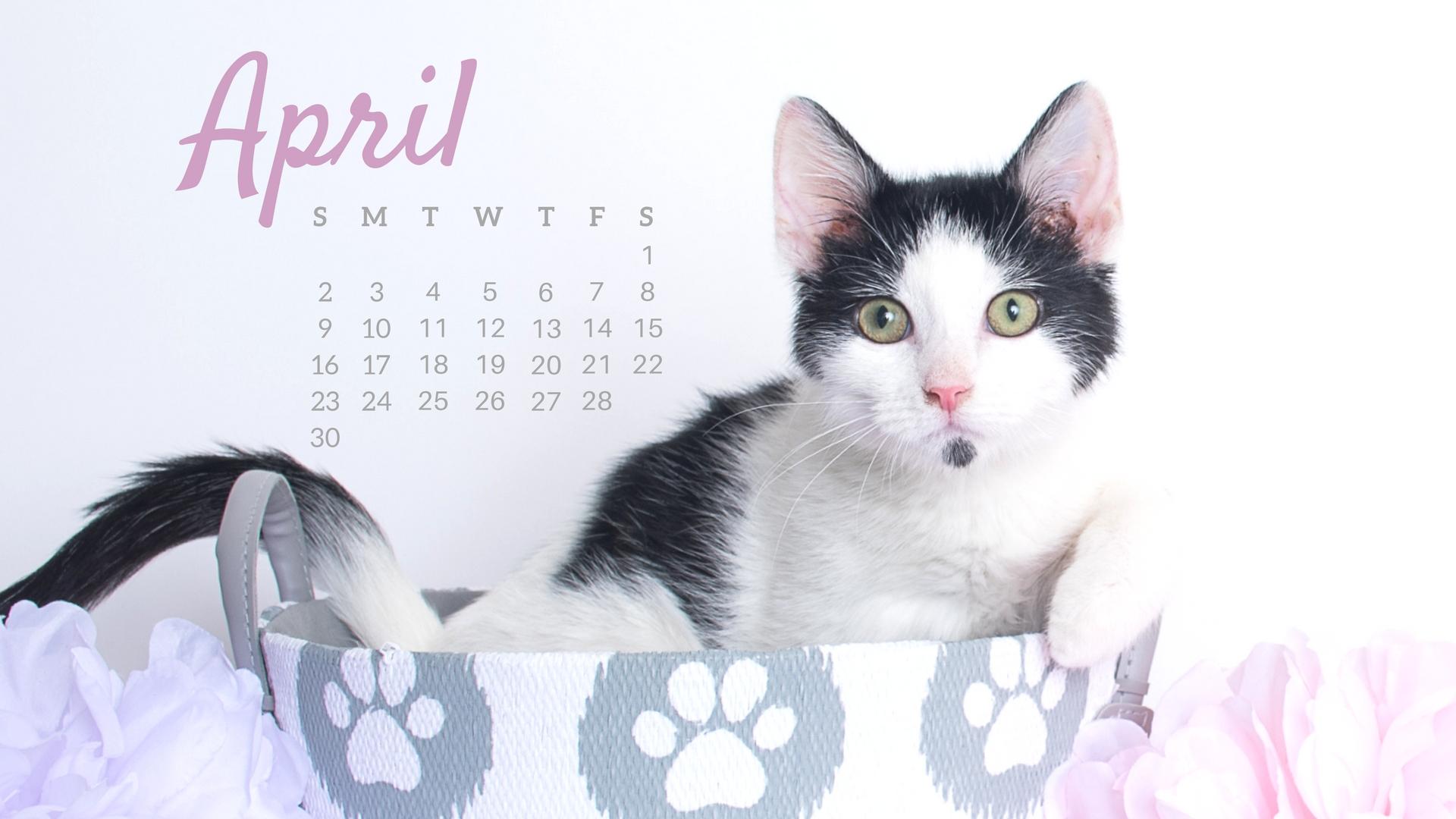 apr-cat-calendar