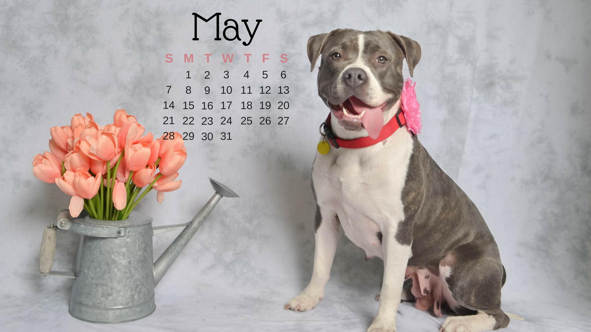 may-dog-calendar
