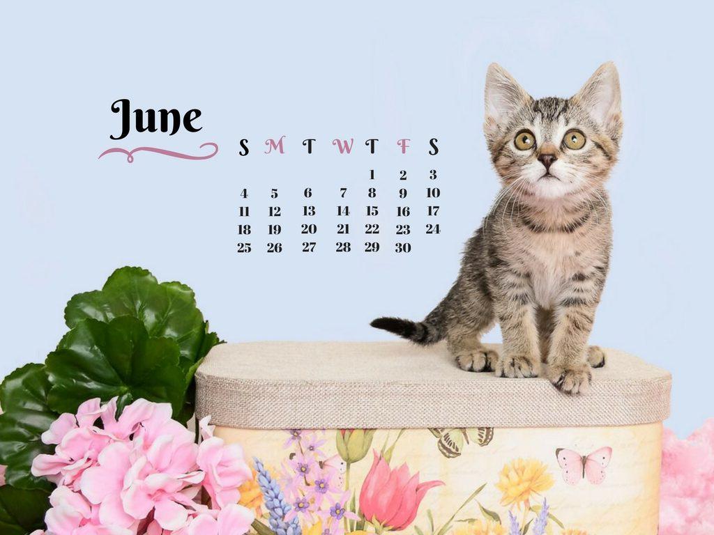 cat-june-calendar