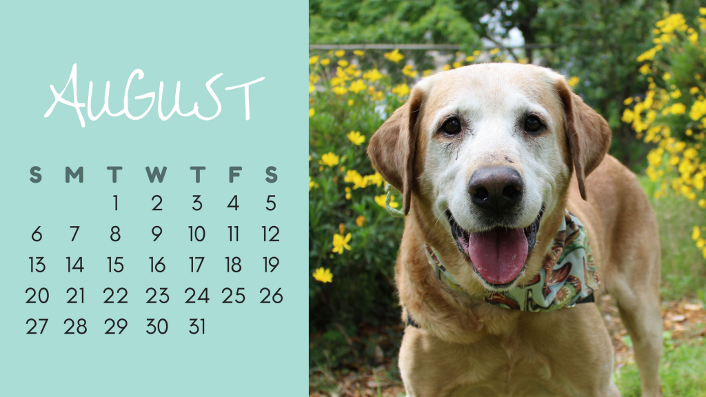 August Dog Calendar - Larry
