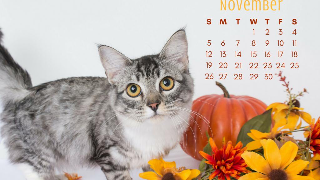 November cat