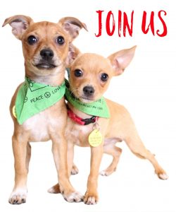 Butte Humane Society Capital Campaign- Join Us