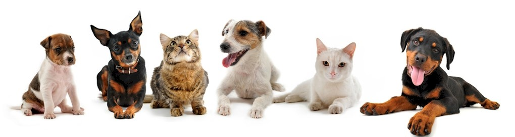 dog cat header