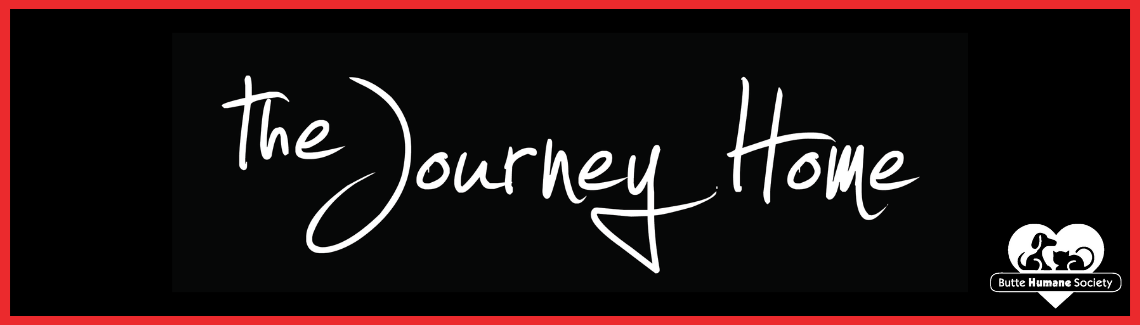 Journey Home Web Banner