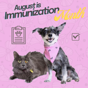 August is Immunization Month with a pink graphic with an image of a grey dog and cat